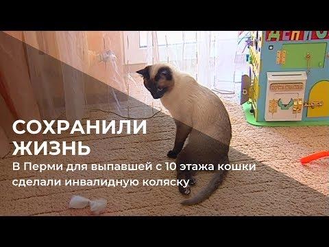 В Перми для выпавшей с 10 этажа кошки сделали инвалидную коляску
