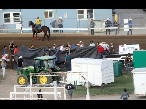 'Driver error' cited in chuckwagon crash that led to death of horse
