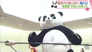 HTBセレクションズ救世主は巨大なパンダ~プロレスで町おこし