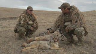 Охота на Волка (Койота) вместе с O'Neill Ops Wolf hunting