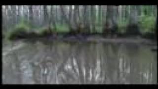 Sufjan Stevens-- The Lord God Bird