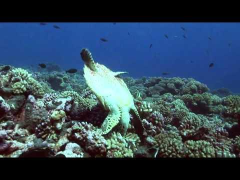 Rangiroa Videoblog2, Rangiroa allgemein,Französisch-Polynesien