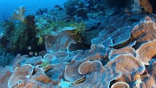 Into the Depths of the Great Barrier Reef | California Academy of Sciences