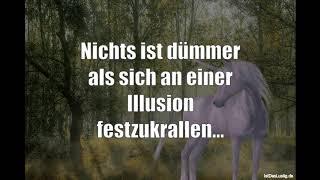 Lustige Sprüche Video Volume 715