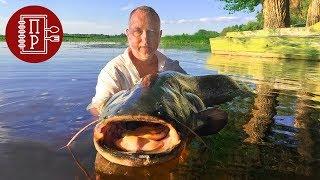 Уха на Дровах из Сома 60 кг! Рецепт Ухи от Рыбака