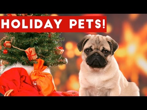 Hilarious Holiday Pet Moments Caught On Tape Weekly Compilation   Funny Pet Videos