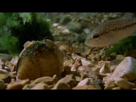 Na maaari kang bumili mula sa isang tao na parmasya worm