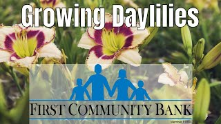 Growing Daylilies: Daylily Types And Propagation