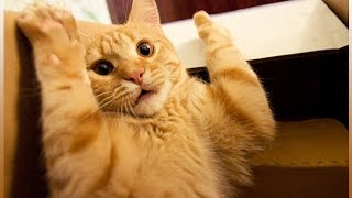 Прикольные животные! Смешное видео про животных! Новая подборка!