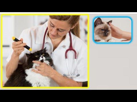 заболевания  ушей  у  кота