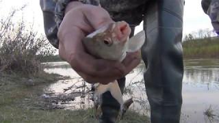Рыболов в абакане на аскизской