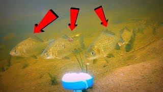 Как приготовить из манки приманку для рыбы