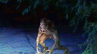 Most MYSTERIOUS MONSTER Sightings Ever Recorded!