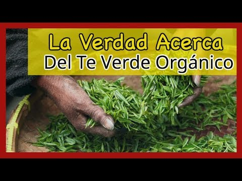 La Verdad Acerca Del Te Verde Orgánico