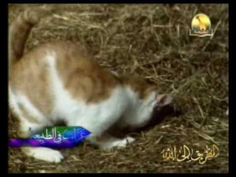 القطط ::: غرائب في الطبيعة