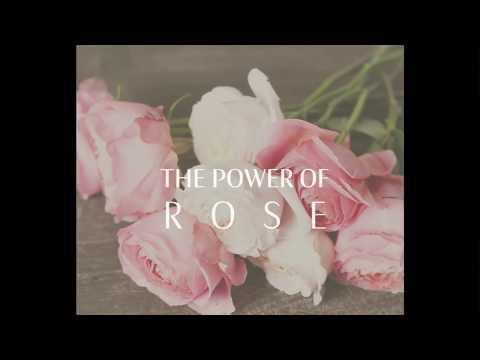 Rose Day Cream & Rose Day Cream Light