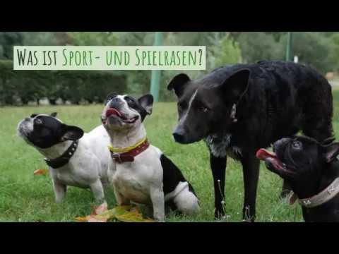 Sport- und Spielrasen – Mit Saat oder Rollrasen zum robusten Grün?