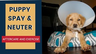 Puppy Spay and Neuter Aftercare and Exercise
