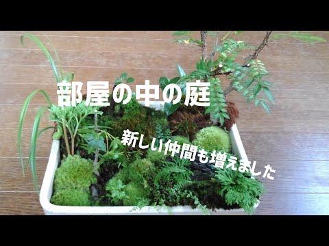 【コケ盆栽】#2盆栽のお手入れと新しい仲間