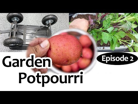 Garden Potpourri Episode 2 - Gardening Tips, Hacks & More!