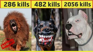 10 Most Dangerous Dog Breeds In The World In Urdu/Hindi | Largest Dog Breed | Pet dogs