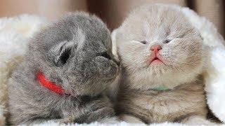 Смешные коты и котята!   😻 Милахи коты 😻   Забавные и милые моменты