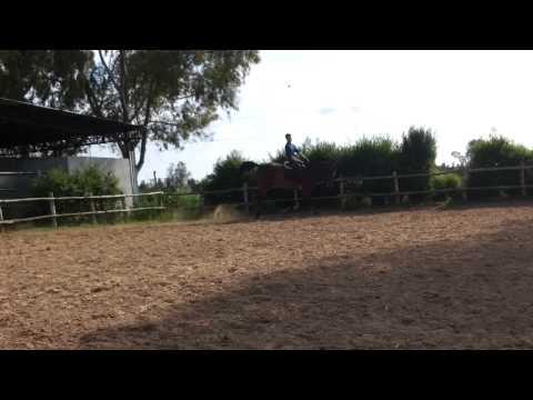 Lattivatore di cavallo con consegna