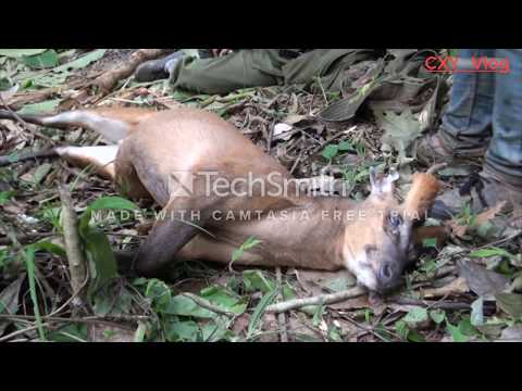 Hunting in the jungle (LAOS)