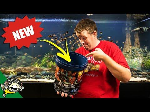 A NEW FISH FOR THE 800 GALLON AQUARIUM!