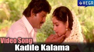 Pedarayudu Movie   Kadile Kalama Video Song