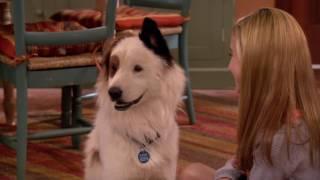 Смотри Сериалы Disney Все Серии Подряд - Собака точка ком - Сезон 1 Серии 10,11,12