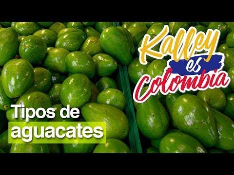 ¿Cuáles son las variedades de aguacate colombiano?