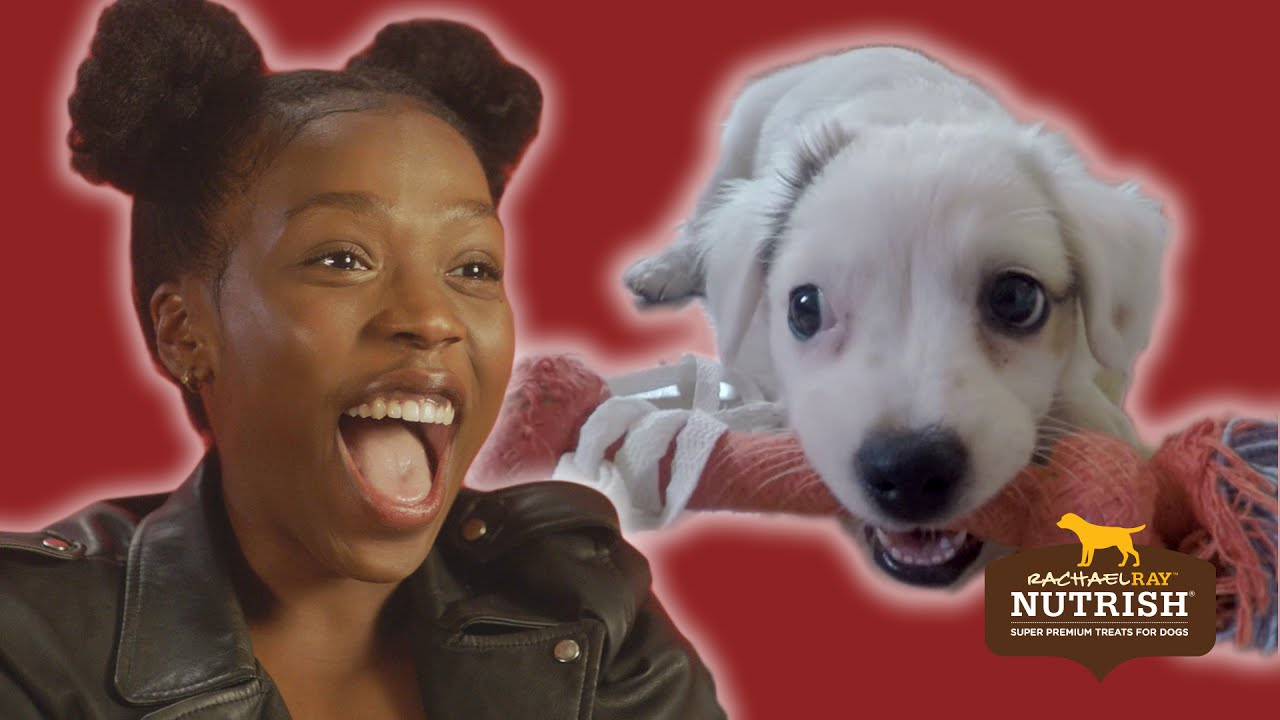 People With Commitment Issues Foster Dogs For A Week // Presented By BuzzFeed & Rachael Ray Nutrish thumbnail
