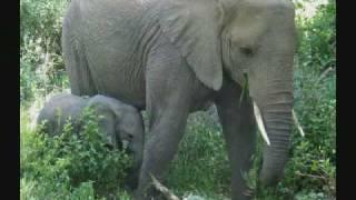 African safaris,tanzania wildlife tours and mount kilimanjaro climbing trips