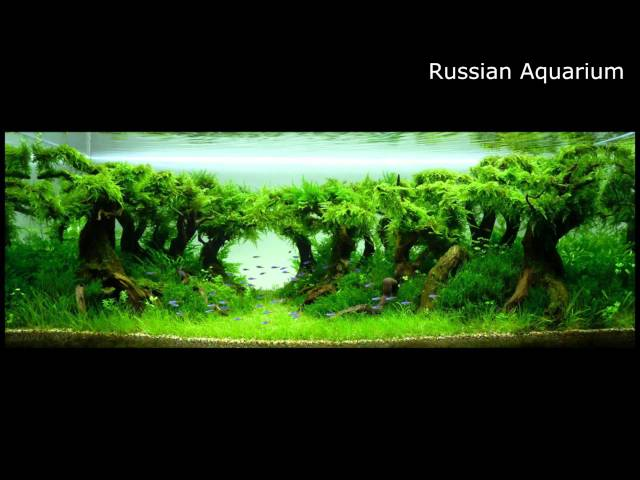 Best World Aquascape - Underwater Landscapes - Awesome Aquascaping #2