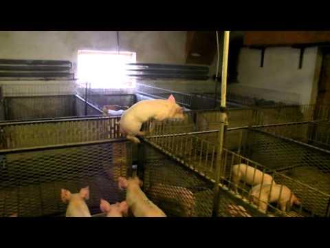 Parazitálja a fogyasztókat vagy a termelőket