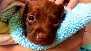 Found In A Trash Bag & Missing A Foot, Rescued Puppy Now Lives Life To The Fullest!
