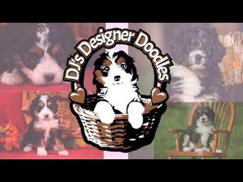 DJ's Designer Doodles