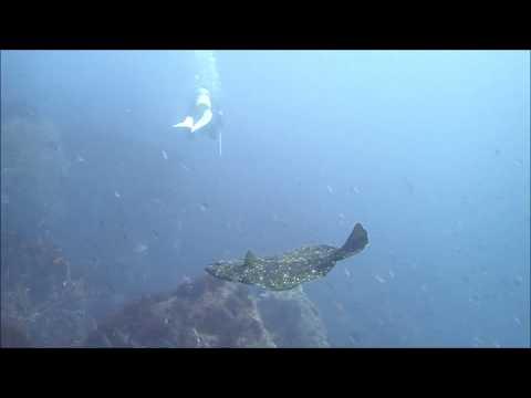 水中映像:ヒラメ