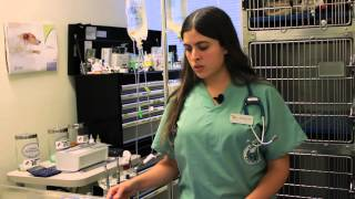 Evidence of Fleas on Cats : Cat Health