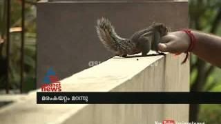 Meet the friendly squirrel  അണ്ണാന് കുഞ്ഞിന് വീട്ടില് പരമസുഖംAsianet News special 29th Dec 2014