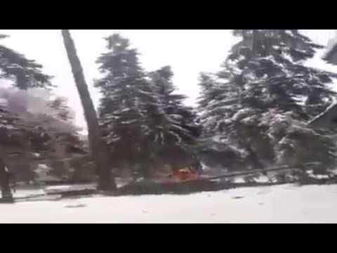 Молдаванин-лесоруб, или Как не стоит пилить деревья