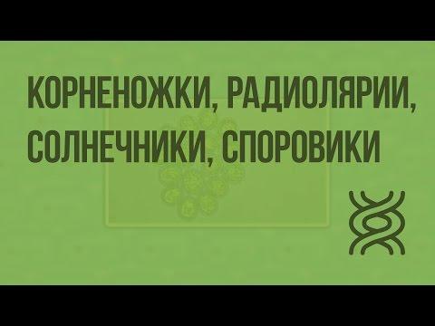 Лекарство от паразитов в организме человека народными средствами