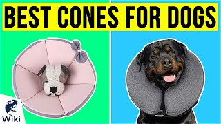 10 Best Cones For Dogs 2020