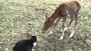 Baby horse meets Cat