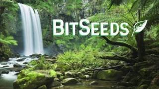 BitSeeds - How to Stake Your Coins and Grow Your Cryptocurrency