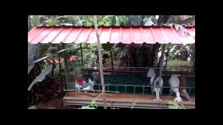 JJ Goat Farm | Hi-tech Ecofriendly Goat Farm Manufacturer|Kerala