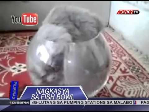 Chair na may itlog ng mga bulate