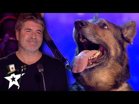 Most Adorable Magic Dog on Britain's Got Talent 2019 | Magicians Got tALENT (видео)