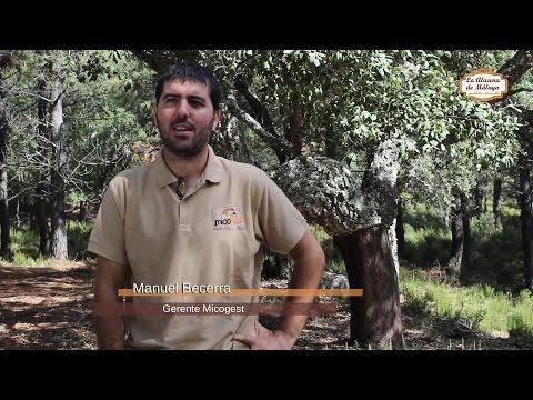 Temporada de Setas en la Serranía de Ronda (I) - Jornada Micológica con Micogest